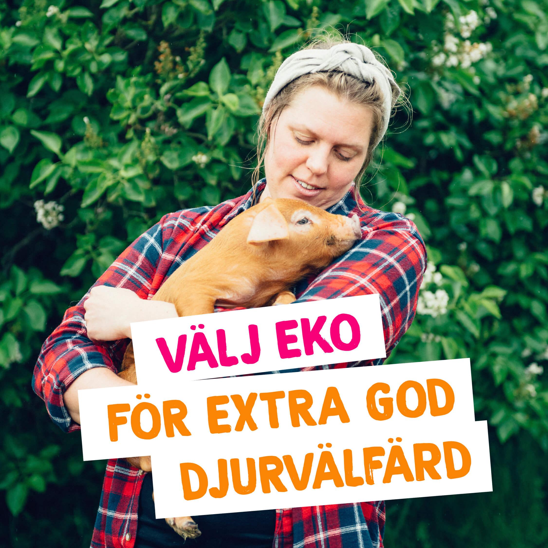 Ekovinst_Djurvalfard_2_tiny
