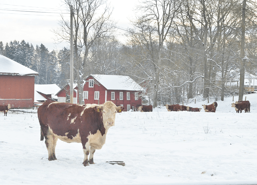 Åsbergby gård